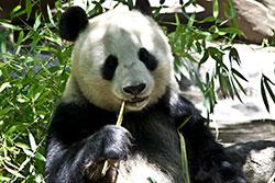 Panda 4.1 and SEO